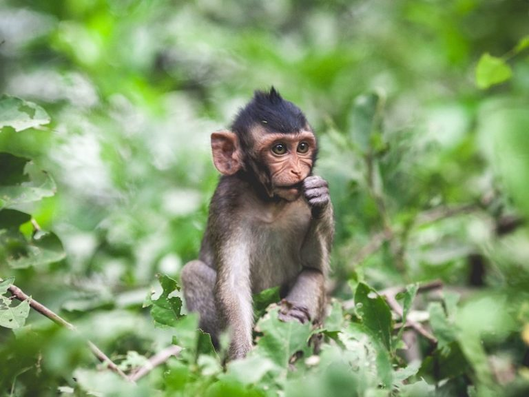 The 7 Most Dangerous Animals in Cambodia