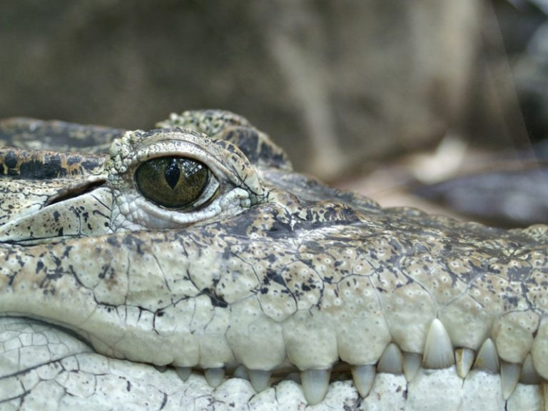 Top 11 Most Dangerous Animals in the World (New Data)
