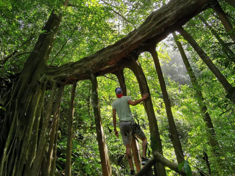 Is Monteverde Worth Visiting? See Costa Rica's Eco Hub