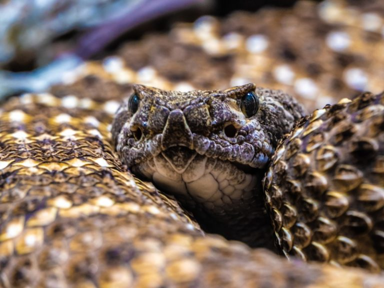 The 7 Most Dangerous Snakes in Mexico